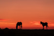 Wild Horses Silhouetted at Sunrise