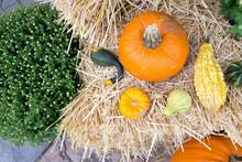 Autumn Harvest Background. Pum...