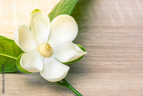 Poster Magnolia White magnolia flower and green leaf on wooden desk.