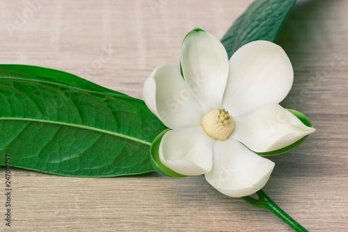 Foto op Plexiglas Magnolia White magnolia flower and green leaf on wooden desk.