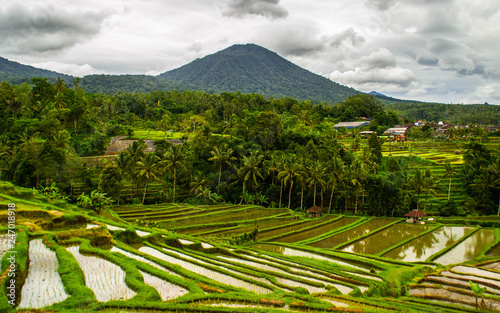 Tuinposter Wijngaard UNESCO World Herritage. Travel/Explore Bali, Indonesia concept. Breathtaking landscape view of Jatiluwih rice fields/terraces. Tourist the most popular attraction/destination.