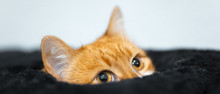 Close-up Of Cute Red Cat Who L...