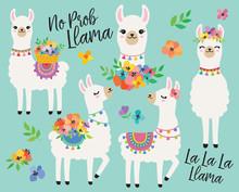 Cute Llamas Or Alpacas With Co...