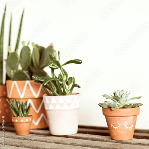 Foto  Stylish botanical compostion of home garden filled a lot of cacti and succulent on wooden table