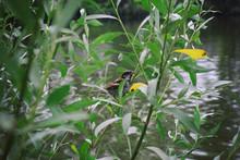 Dark-eyed Bird Sitting On A Branch Near The Ground.