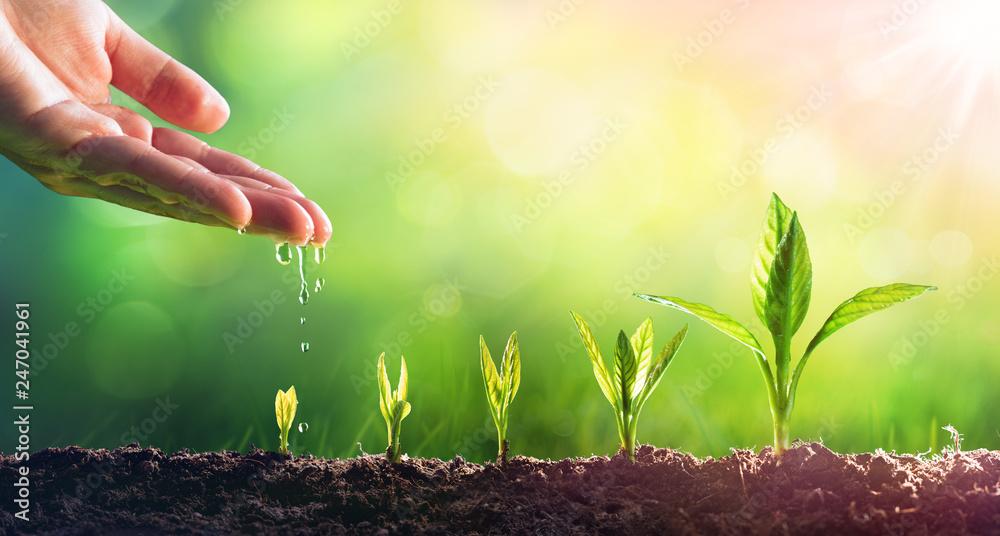 Fototapeta Hand Watering Young Plants In Growing