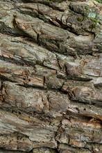 Old Bark Tree Oak Weathered Ol...