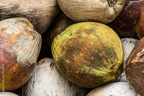 Fotografie, Obraz  pile of coconuts brown natural pattern close-up set of palm nuts tropical fruit