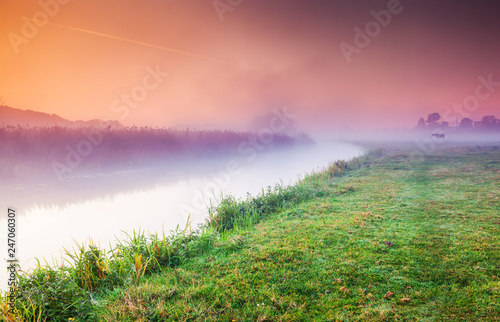 Fantastic foggy field in the sunlight. Location place Seret river, Ternopil.