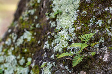 Green Moss On A Tree Trunk With Fern Background In The Forest ~NATURE'S TEXTURES~