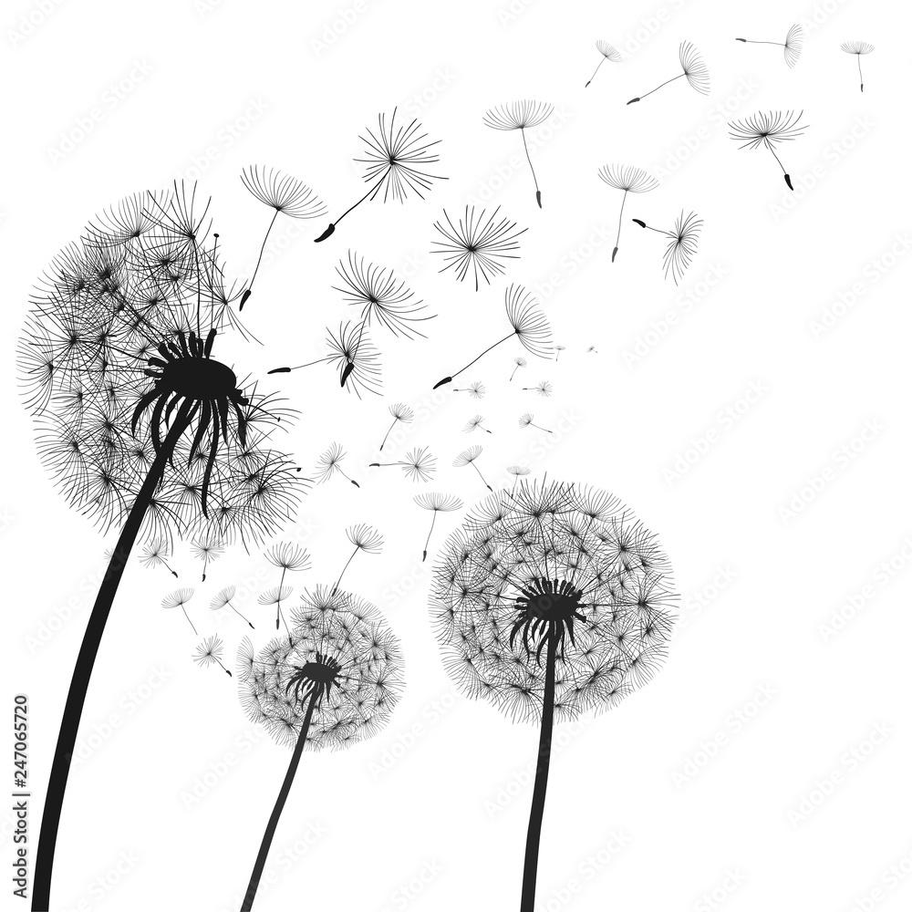 Fototapety, obrazy: Abstract black dandelion, dandelion with flying seeds illustration - vector