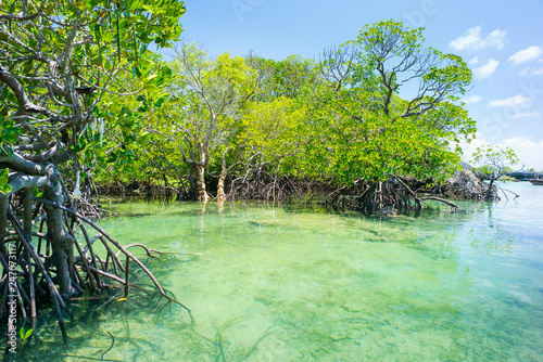 Foto mangrove forest and emerald water of lagoon in Tanzania