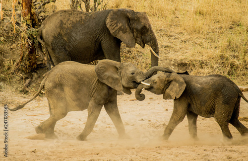 Photo  Wild African Elephant Herd