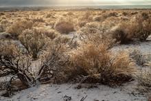 Snowfall Winer Morning Desert ...