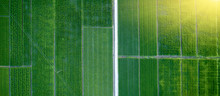 Aerial Photography Of Green Rice Fields