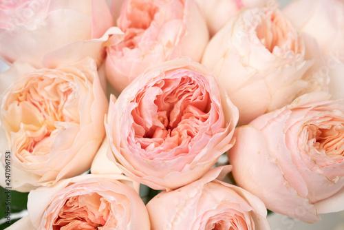 Pink English Garden Roses Flower Background © ilzesgimene