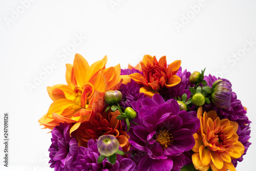 Fototapeta  Dahlia flower border on white background