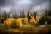 Incredible Misty Autumn Or Early Winter View Of Gorgeous Pine, Birch And Aspen Trees In A Forest In Dixie National Forest In Southern Utah, USA.