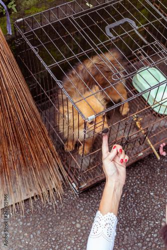 Fotografie, Obraz  Cute little dog in the cage. Tropical island of Bali, Indonesia.