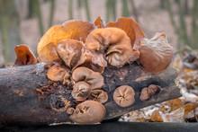 Closeup Shot Of Edible Mushroo...