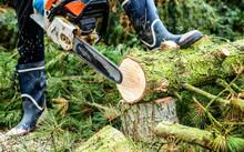 Lumberman With Chainsaw Cutting Wood