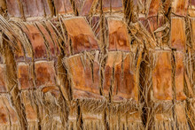 Texture Of The Palm Tree Trunk For Background