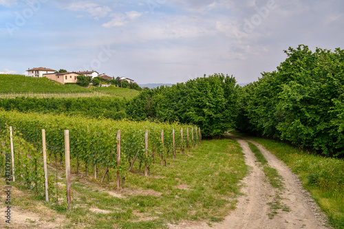 Fotografia  Scenic view of a vineyard hill with a borough on the top and a country lane amon