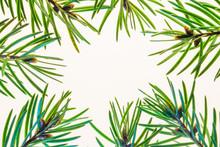 Fir Branch On White Background...