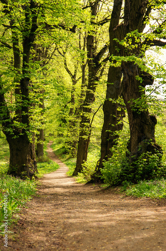 Cadres-photo bureau Route dans la forêt a path is in the green forest