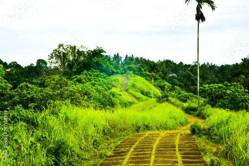 In de dag Lime groen Lush green rain forest tropical monsoon jungle with trees, grass, plantation for summer school trekking camp