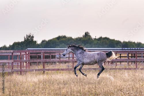 Fotografía  Horse galloping
