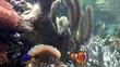 Unterwasserwelt mit Clownfisch im Fokus