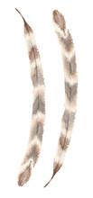 Stylized Semiplume Feather Of ...