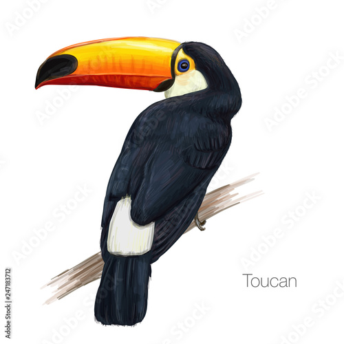 Foto op Canvas Toekan toucan hand drawn vector illustration