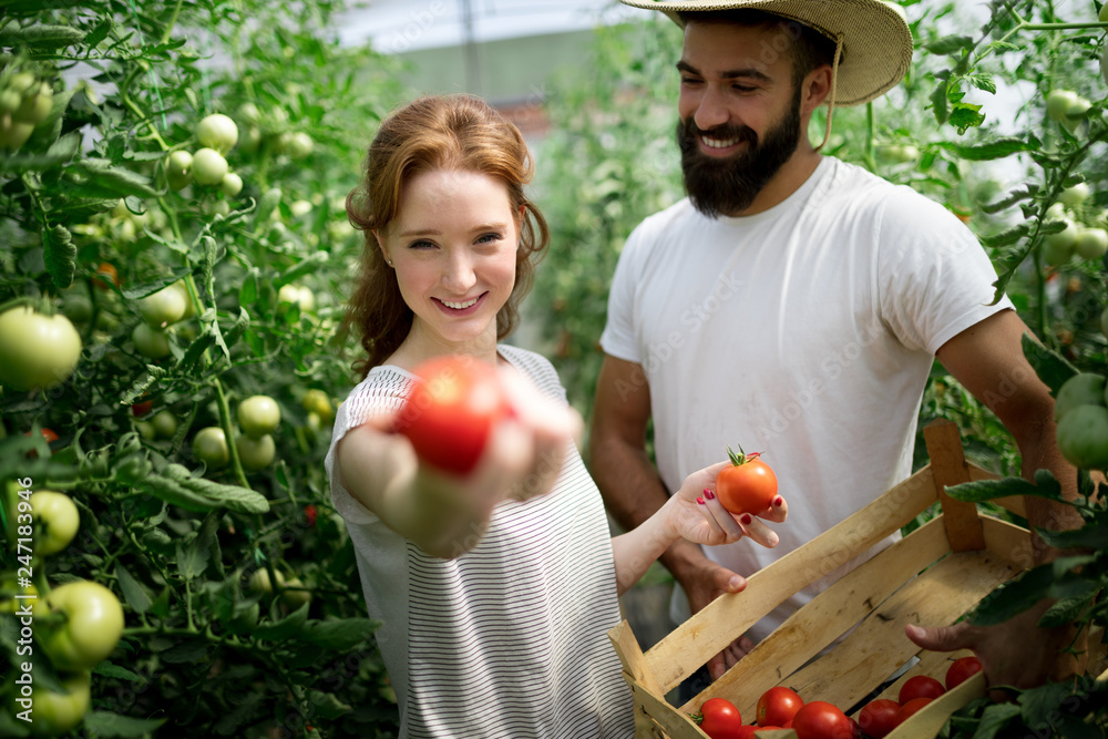 Fototapety, obrazy: Two young people working in greenhouse.
