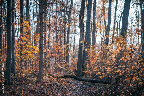 Foto op Plexiglas Oranje forest road in autumn with leafs