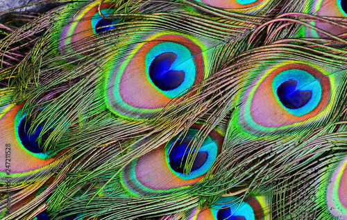 Obraz paw   peacock-feather-on-black-background