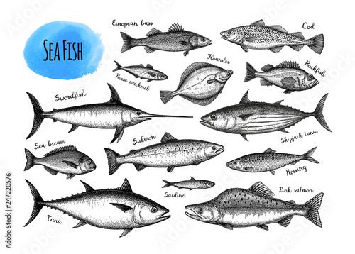 Fototapeta Fish big set.