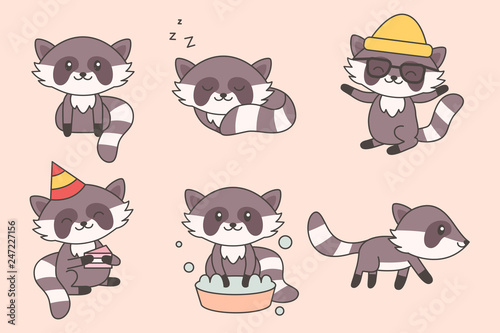 Photo  Kawaii Funny Raccoon Collection
