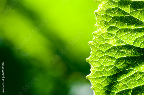 Cuadros en Lienzo  Green, abstract composition with leaf texture and soft focus