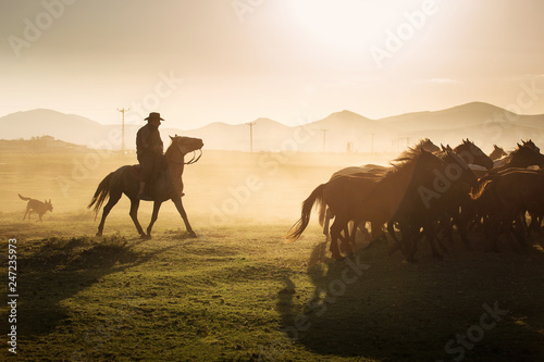 Spoed Foto op Canvas Wild horses leads by a cowboy at sunset with dust in background.