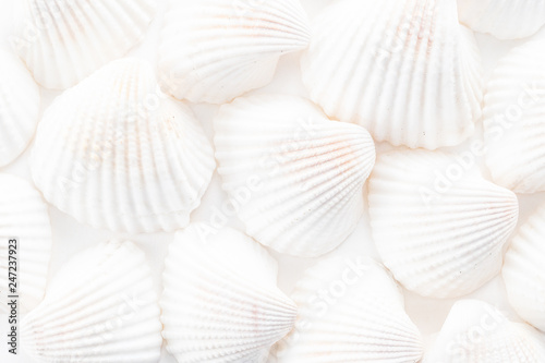 Fotografia Sea Shells background
