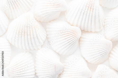 Fototapeta Sea Shells background  obraz
