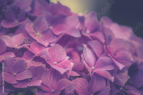 In de dag Hydrangea close up background image of hydrangea flowers.