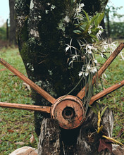 Roda Quebrada