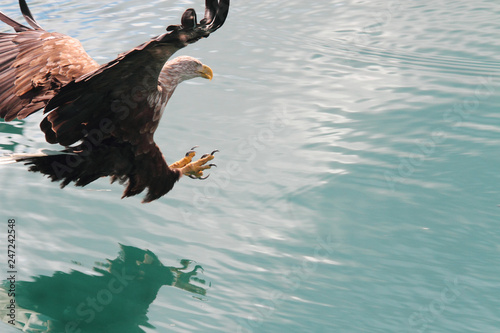 Photo  eagle diving on its shadow