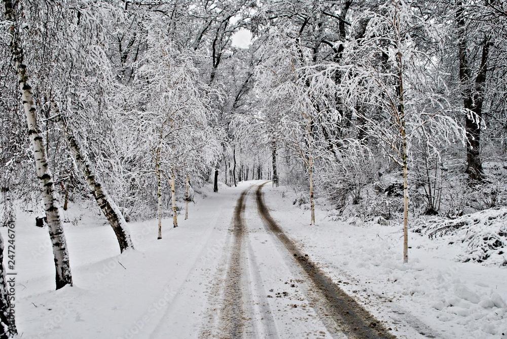 Fototapeta Droga przez zimowy las