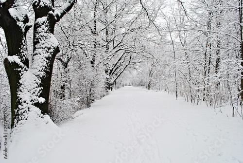 Fototapeta premium Pejzaż zimowy