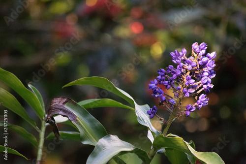 Fotografie, Obraz  purple flowers in the garden