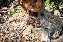 Tree Root Splitting Apart The ...